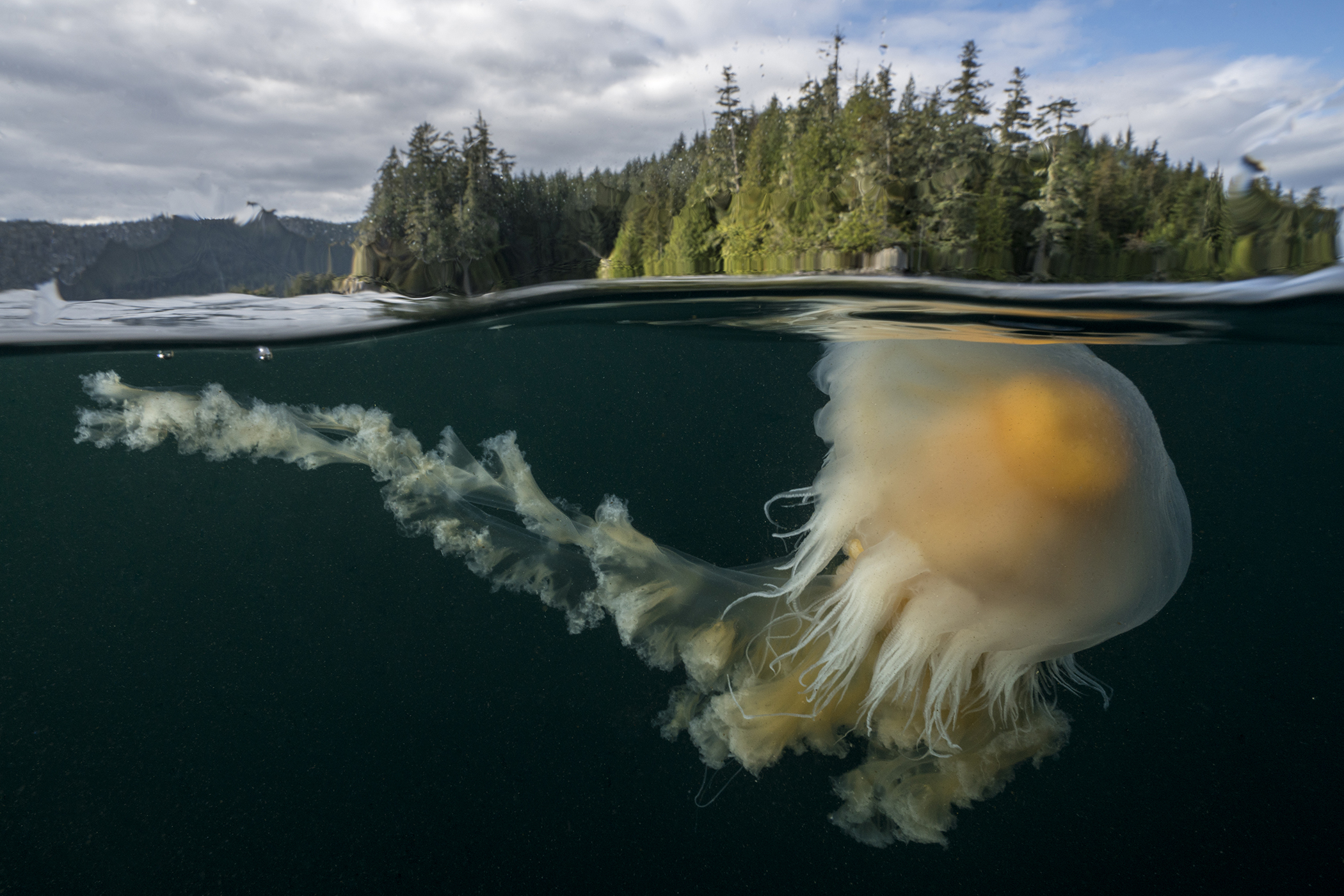 A jellyfish pictured in the Salish Sea, off the coast of British Columbia.