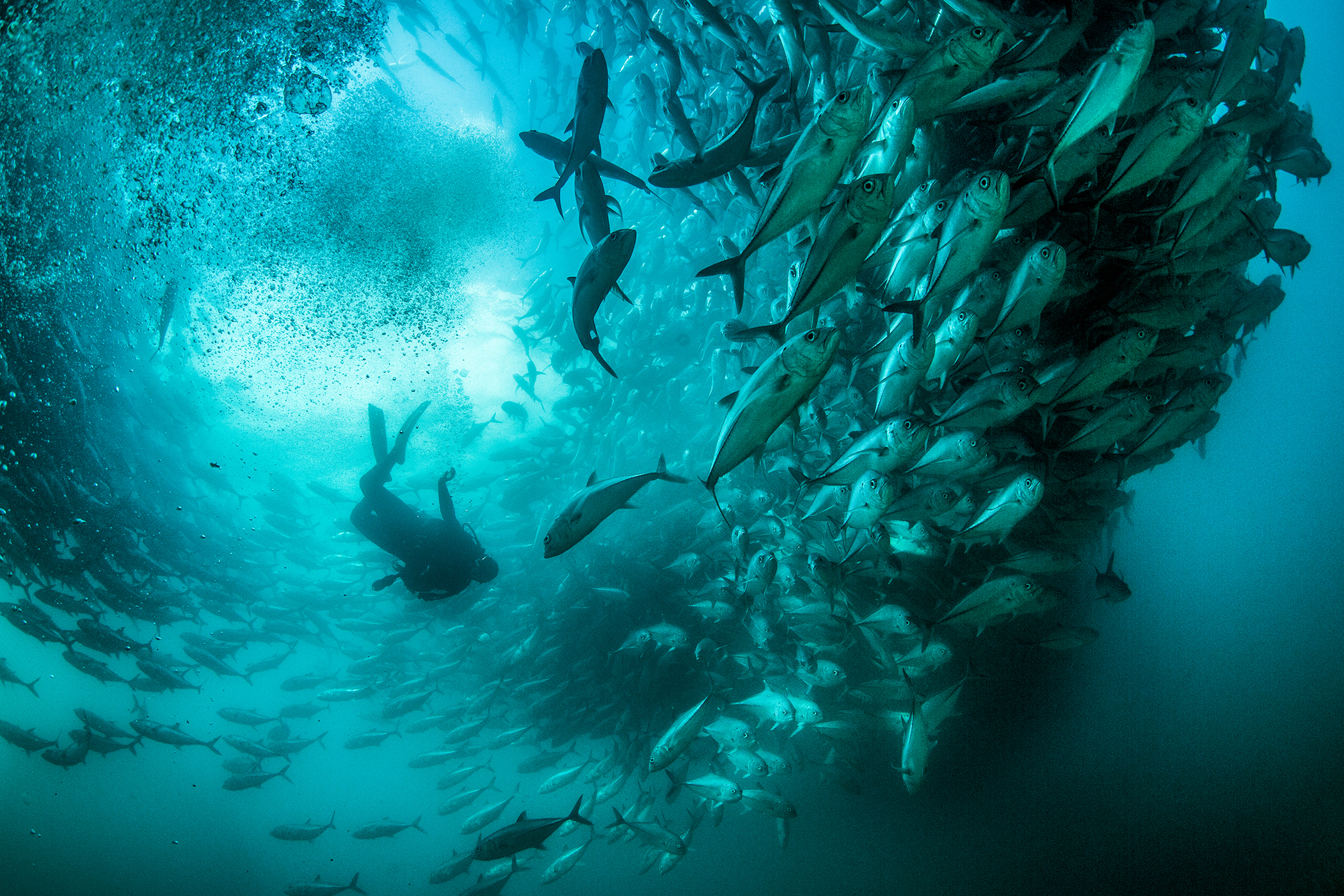 Cristina Mittermeier is pictured diving in Cabo Pulmo National Park, Mexico.