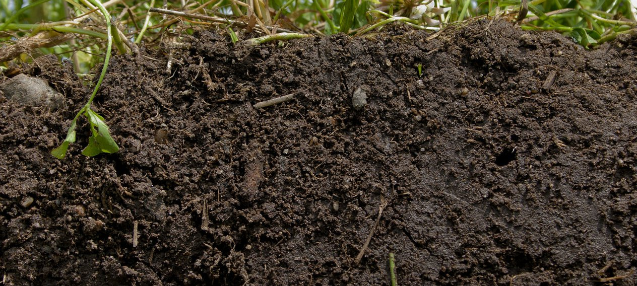 5 Facts That Show Why Soil Is So Important
