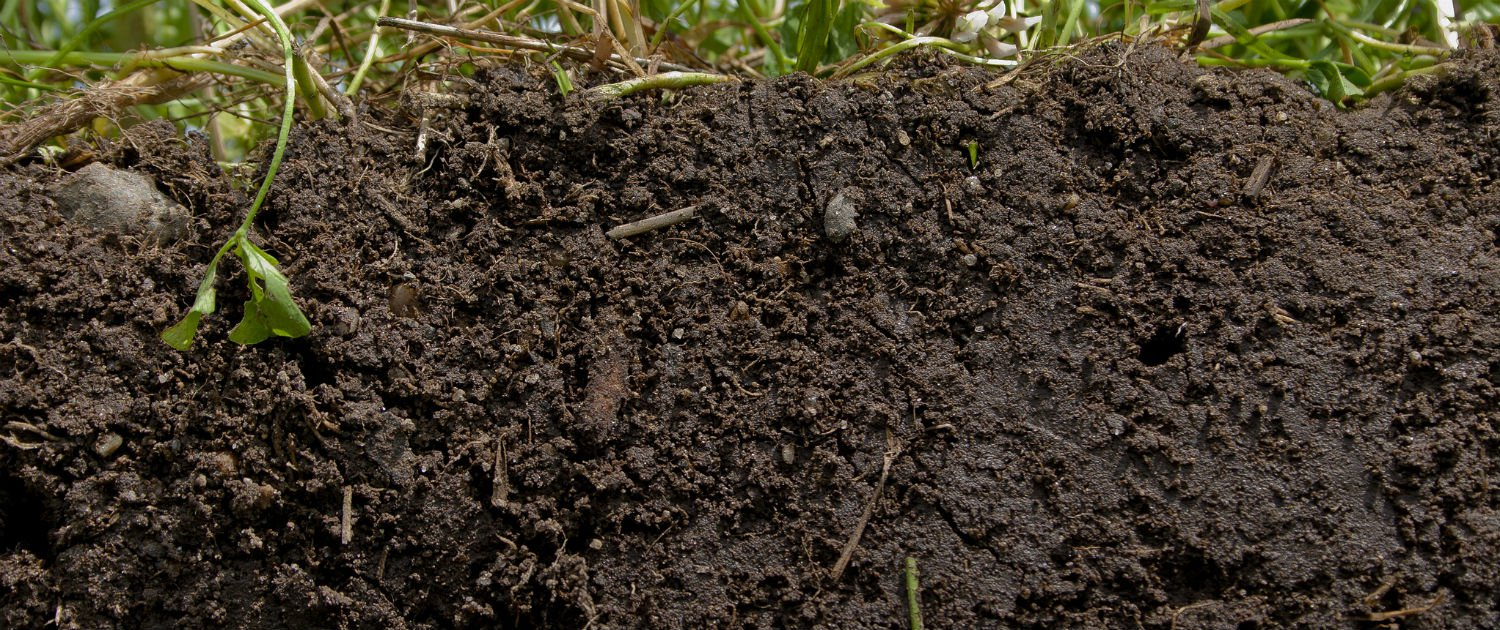 5 facts that dig into the truth about soil for All about soil facts