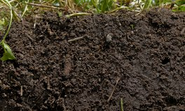 Article: 5 facts that dig into the truth about soil