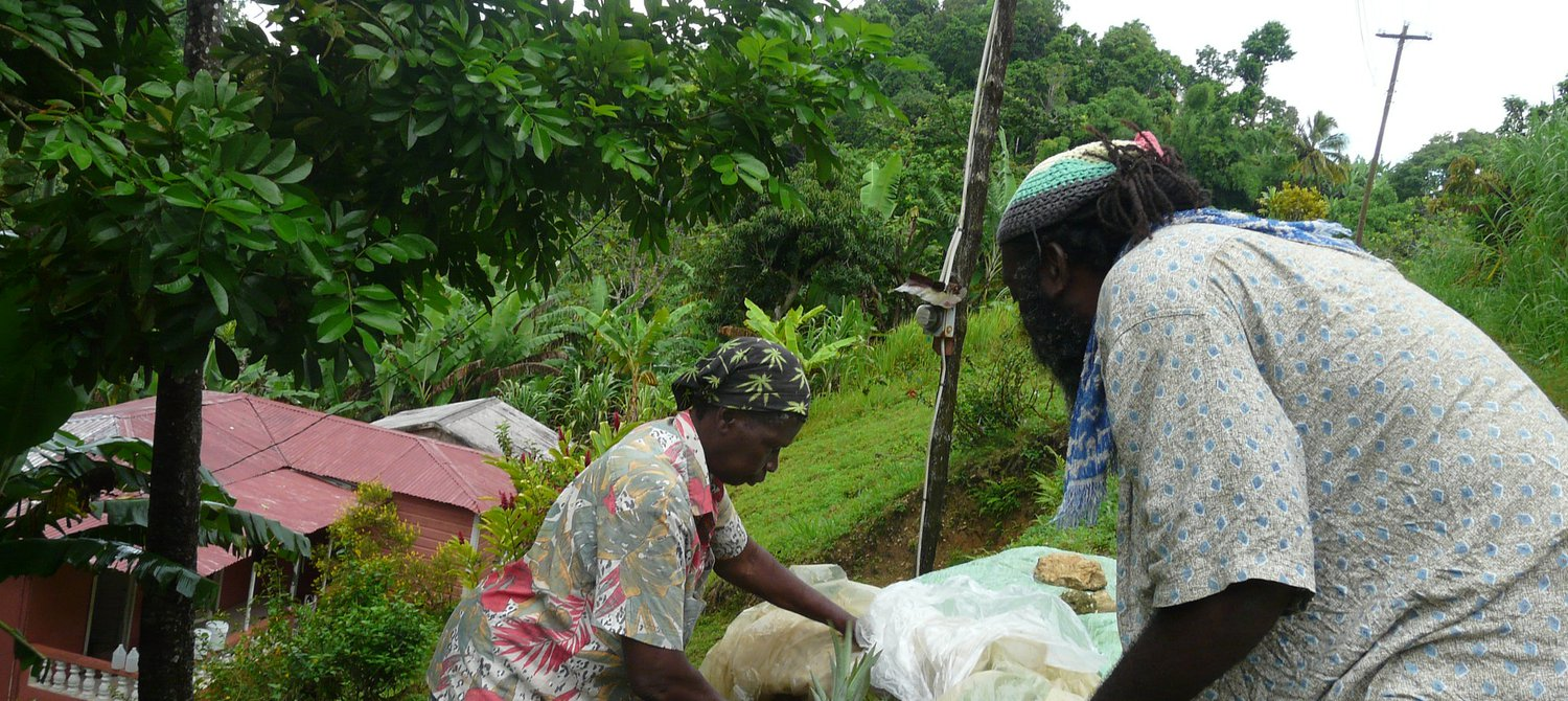 Jamaican Women Worst Hit by Livestock and Crop Theft During COVID-19 Pandemic
