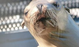 Article: More Than 70 Sea Lions Have Been Poisoned by a Toxic Algae Bloom in California