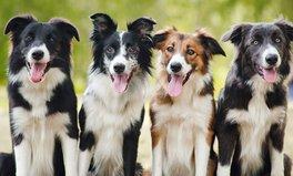 Artikel: Ein besonderer Feiertag nur fuer Hunde