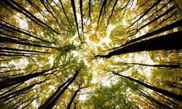 Article: Trees in the US Are Moving North, West to Escape Climate Change