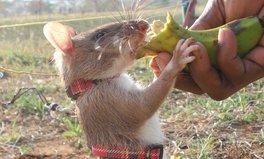 Video: Mosambik ist frei von Landminen