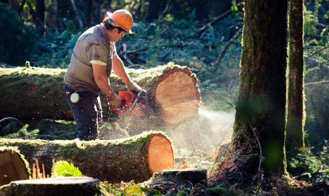 lumberjack most dangerous jobs.jpg