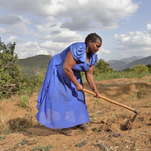 Farm Africa - Telesia farming, square.jpg