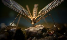 Artículo: Even Insects Are Carrying Around Microplastics