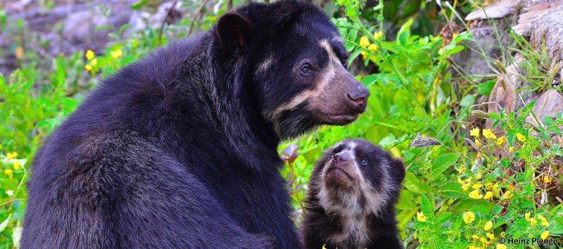 baby and mama bears.jpg