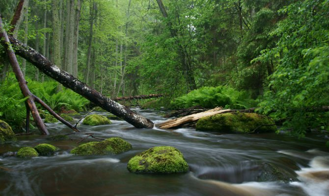 nature_greenhatters.jpg__670x400_q85_cro