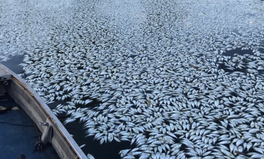 Article: Drought or Water Mismanagement? Australia Struggles Through Another Mass Fish Kill