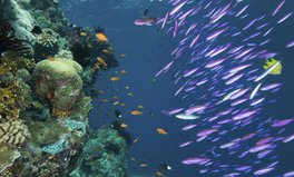 Article: 5 Of The World's Coral Reefs That Are Dying Today