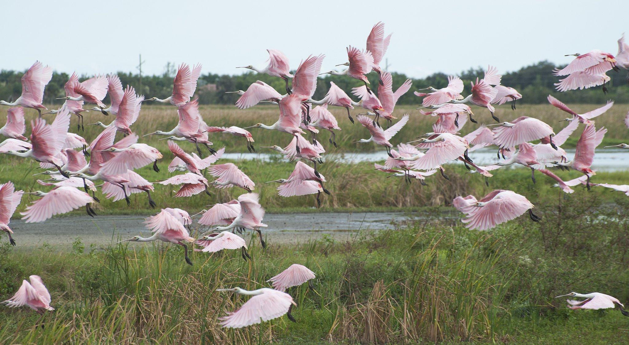 The Everglades.jpg