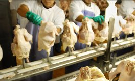 Article: Harsh pace of poultry factories means workers wear diapers