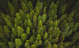 Artikel: Pakistan Plants 1 Billion Trees in Massive Reforestation Project