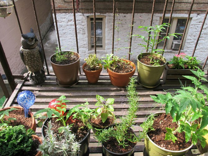 apartment garden creative fire escape garden editedjpg apartment gardening guide