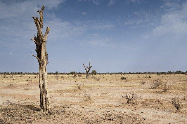 desert sand dead tree