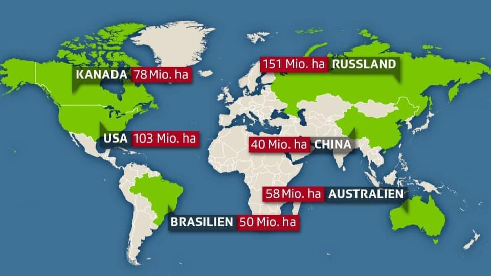 verfügbare waldfläche weltweit klimaschutz klimawandel.jpg