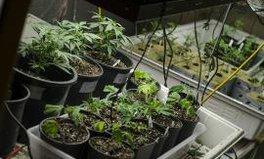 Article: Uruguay marijuana legalization one year later