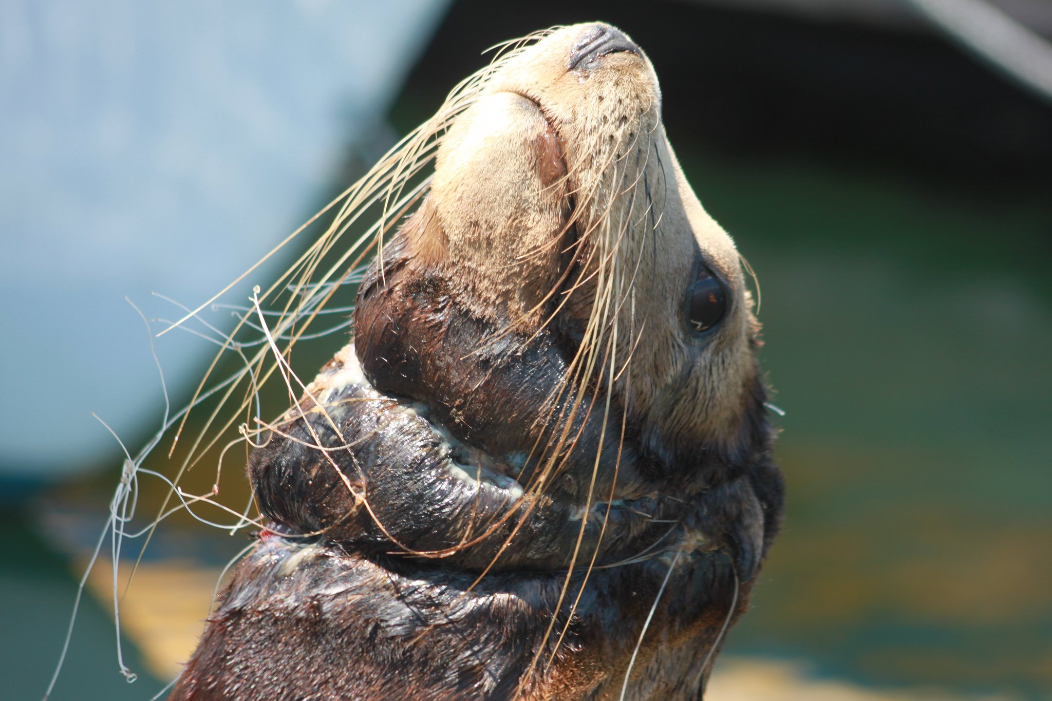Seal bycatch
