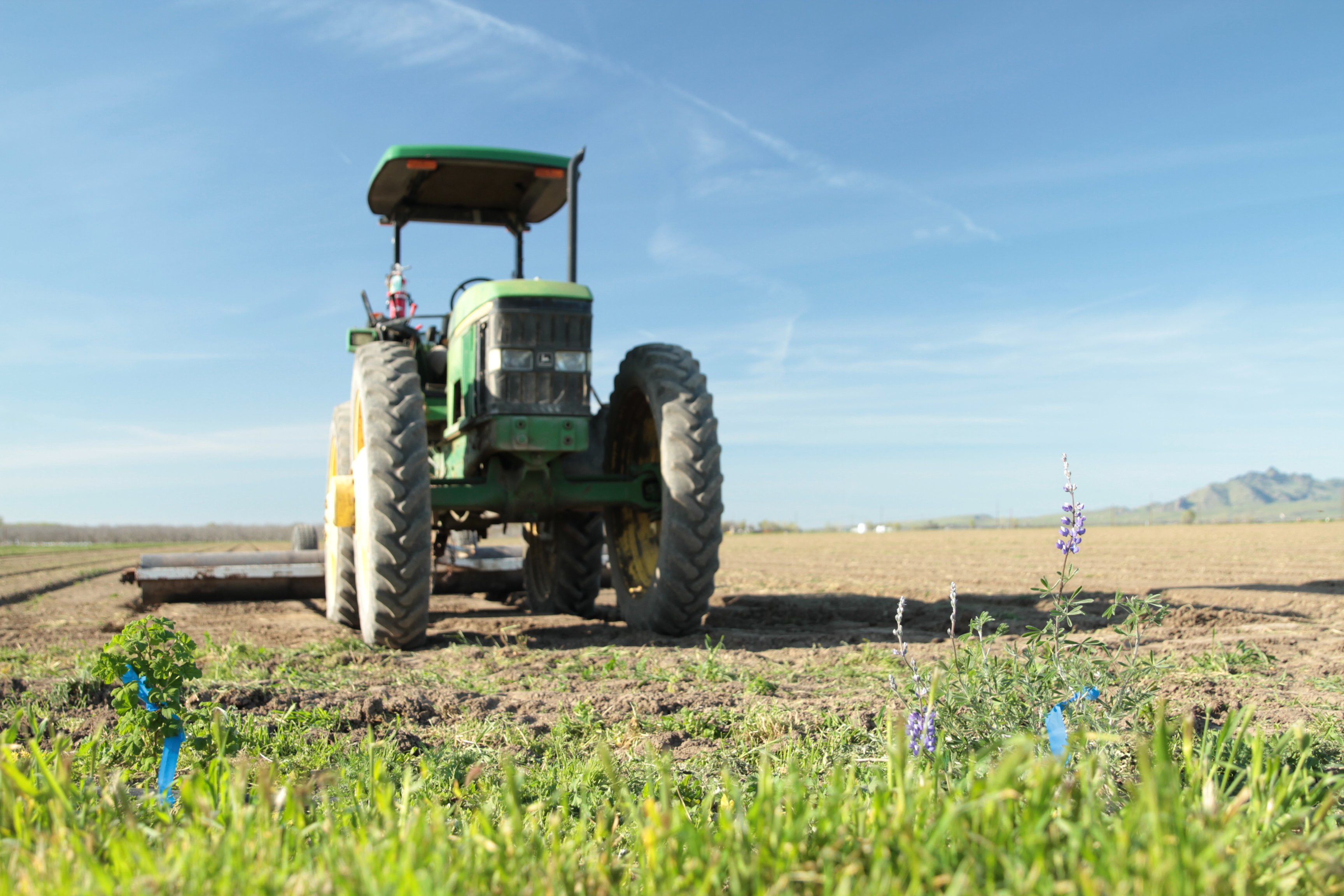 Park Farming habitat_Cameron Newell_Xerces.JPG