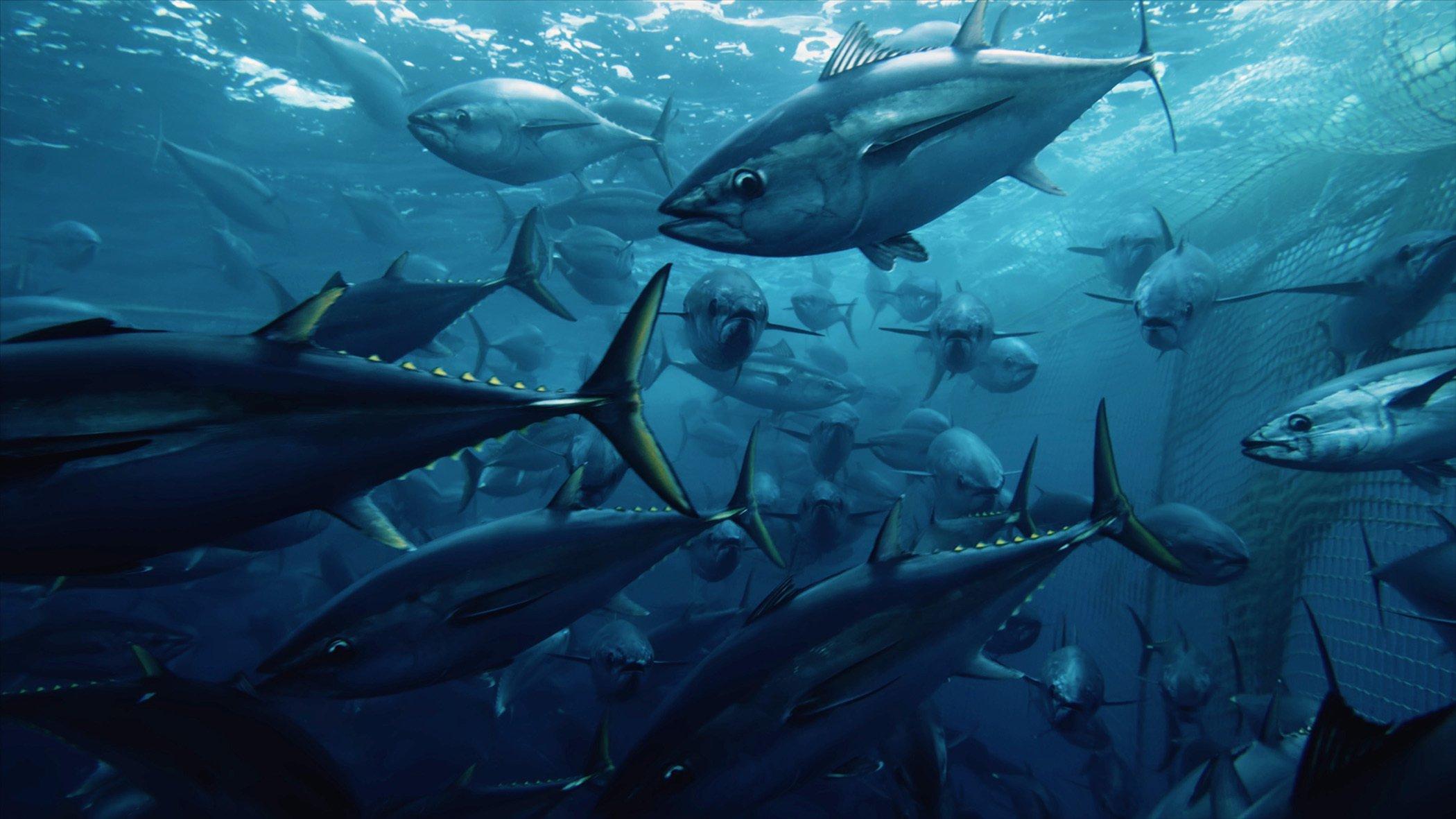 Tuna in Net.jpg