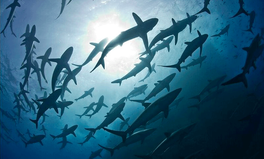 Article: Ecuador Jails Chinese Fishermen Caught With 6,600 Sharks