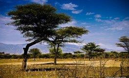 Article: Africa's Driest Region Will Turn Green If Climate Change Has Its Way