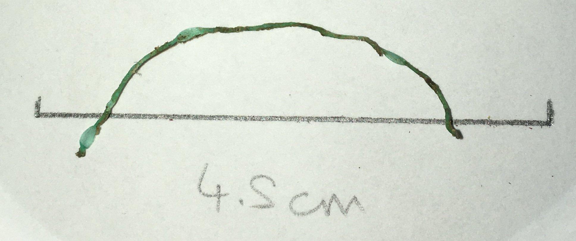 McGoran_Green fibre from a Thames Thornback Ray.jpg
