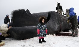 Article: 'This Is the Year': An Alaska Town Hopes, Prays, to Catch a Whale