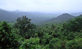Artikel: Paar Indien Regenwald