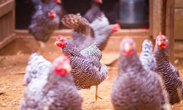 Article: Why the Bird Flu Is Really a Harbinger for the Next Global Pandemic
