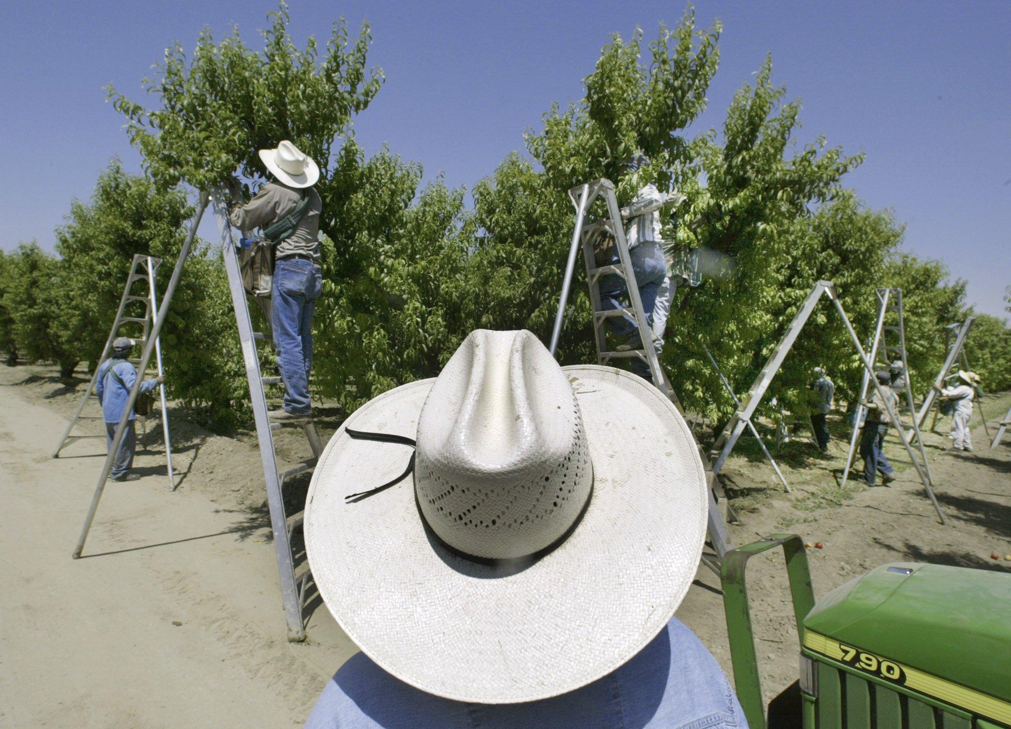 pesticide chlorpyrifos ban