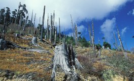 Artikel: Growing Deforestation in Asia Linked to Spread of Infectious Diseases