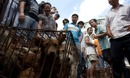 Article: China Bans Selling Dog Meat at Its Annual Dog Meat Festival