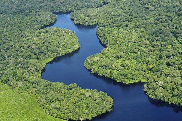 Amazon rain forest in Brazil