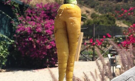 Article: Ugly Fruits and Vegetable Might Be the Answer to Zero Food Waste