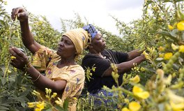 Article: Why Investing in Women Helps Save the Planet