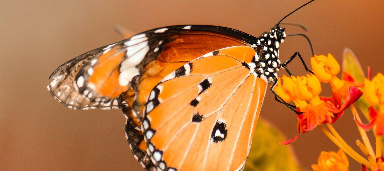 Déclin des insectes dans le monde : les experts sont terrifiés!