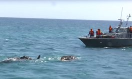Article: The Sri Lankan Navy Keeps Rescuing Drowning Elephants