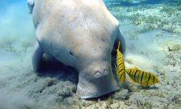 Article: marine park malaysia ocean life