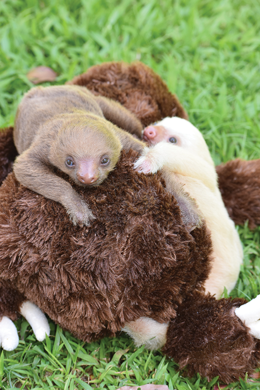 Sloth Sanctuary_2_72dpi_041116.png