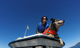 Artikel: These Dogs Are Helping Protect Whales by Tracking Down Their Poop