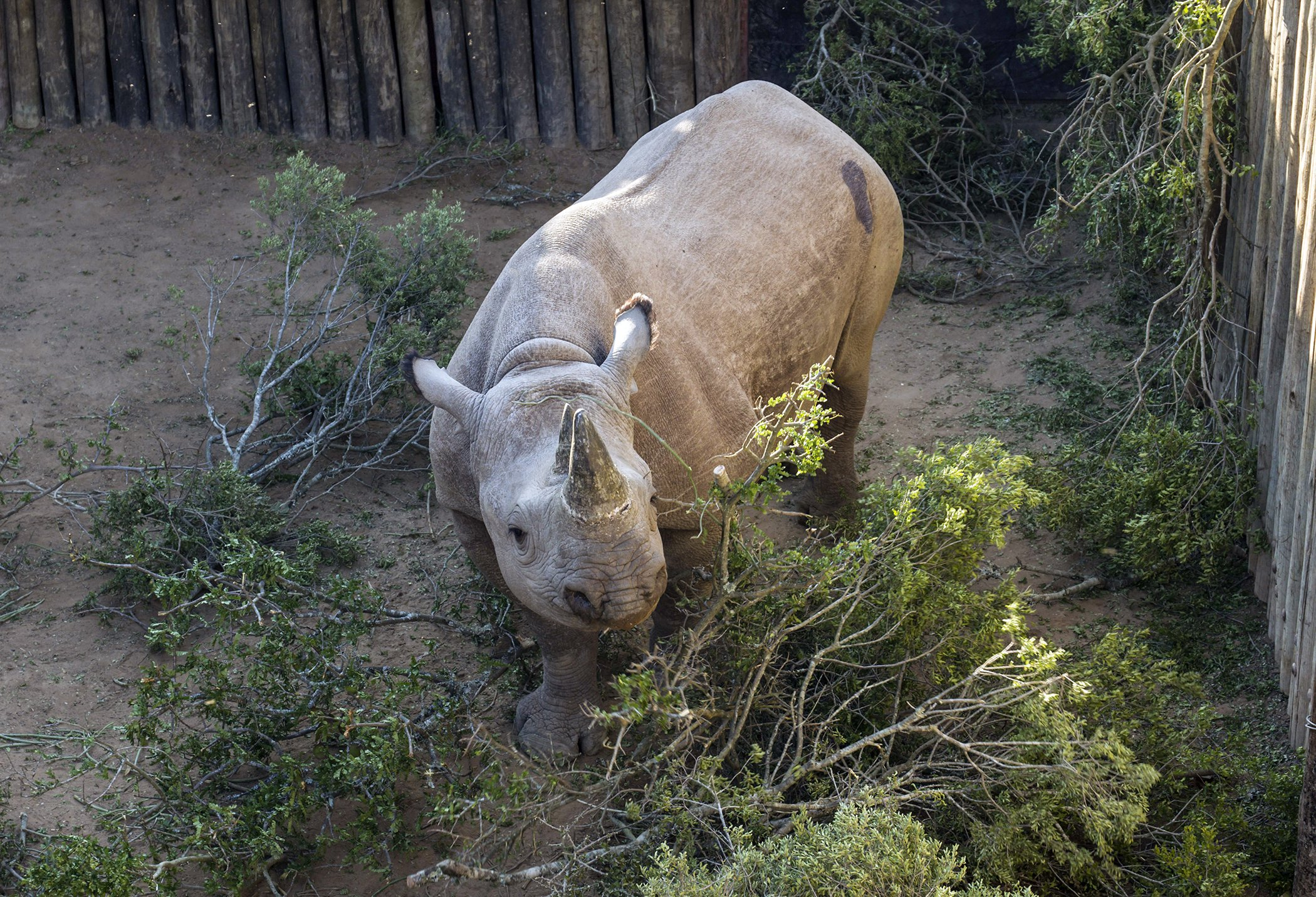 South-Africa-Rhino-Conservation-Africa.jpg