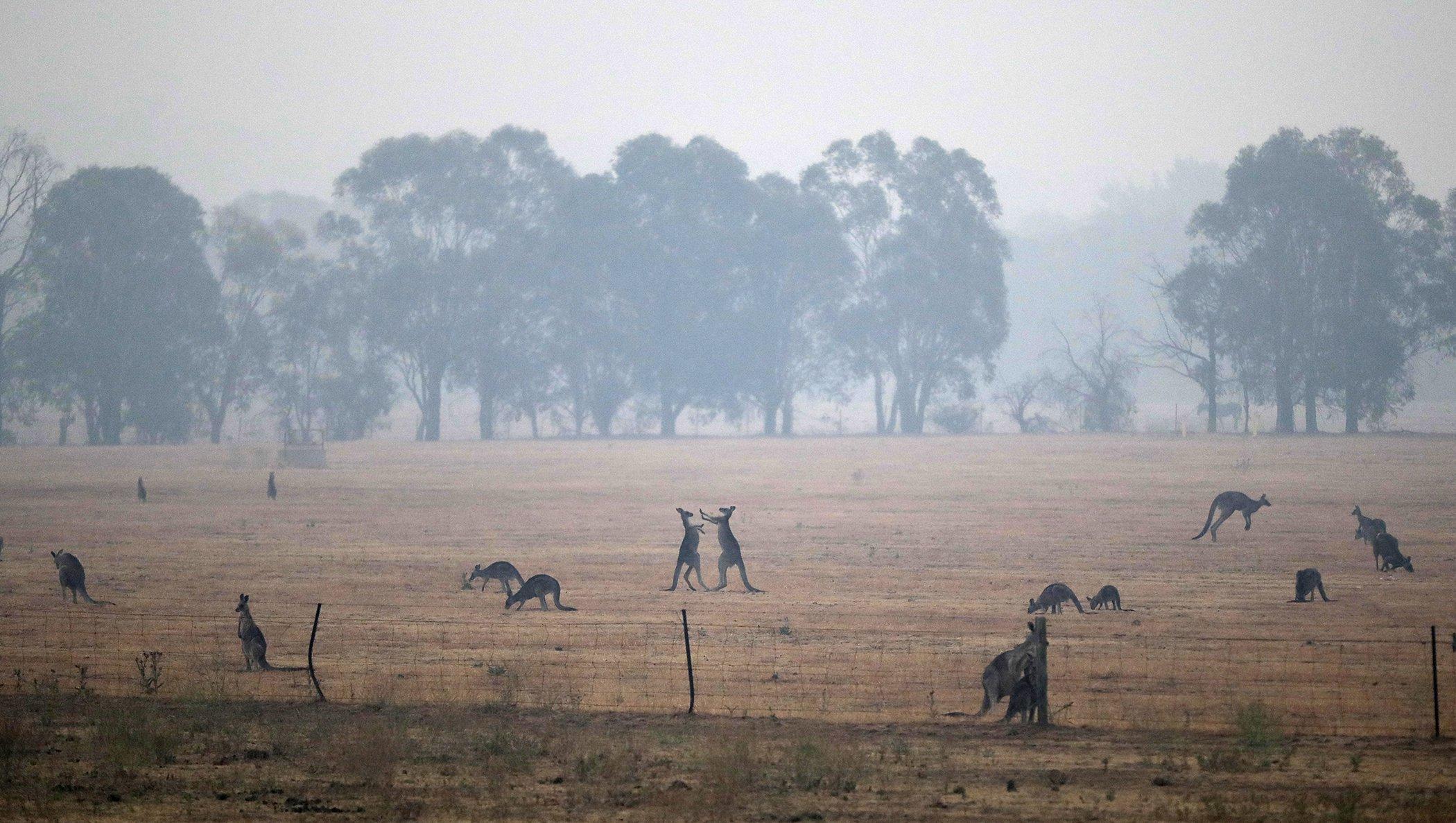 Australia-Wildfires-002.jpg