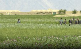 Article: A lucrative crop—it's not opium poppies—may help Afghanistan's farmers