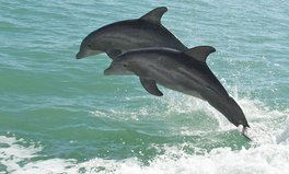Article: England Has Its First Pod of Resident Bottlenose Dolphins