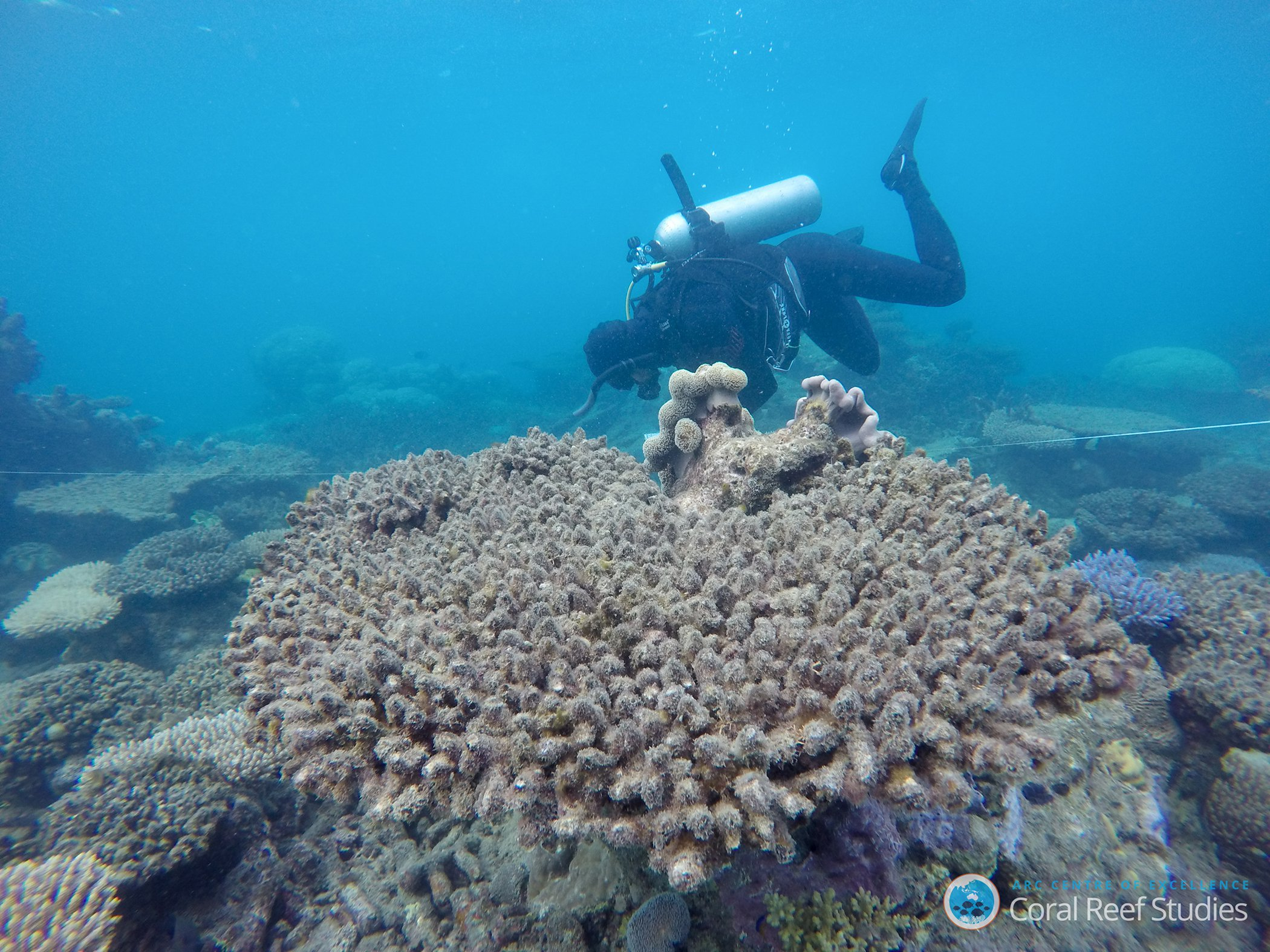 Baby Coral Declined By 89 Across The Great Barrier Reef