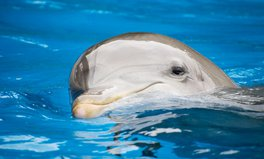 Artículo: Baby Dolphin Found Dead With Stomach Full of Plastic Trash